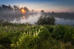 summer fog and the beautiful morning sun in a landscape