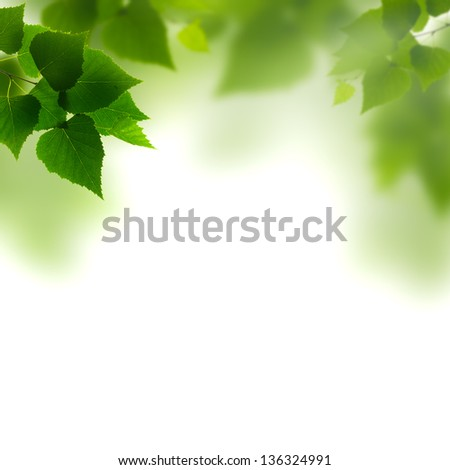 Summer foliage against white backgrounds - Shutterstock ID 136324991