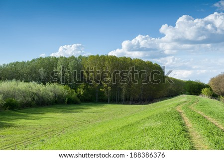 summer forest and ground road beautiful landscape