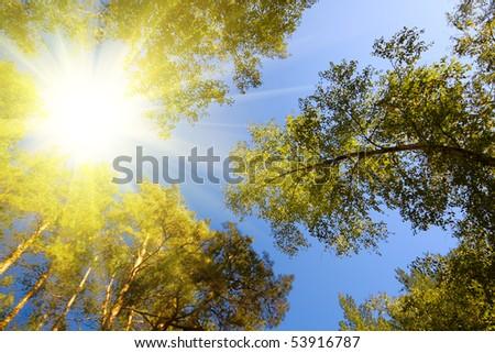 சூரியனை நடுப் பகலில் பார்த்தல் Stock-photo-summer-forest-and-sun-rays-53916787