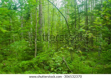 Summer forest background. Impenetrable forest. Green backdrop.