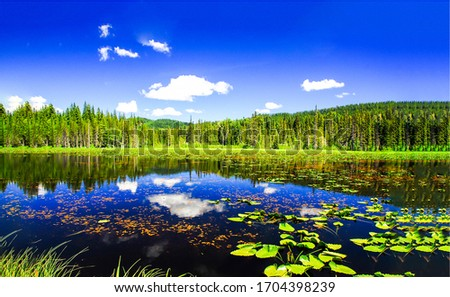 Summer forest lake water reflection landscape. Forest lake deep blue water. Lake water reflection in forest. Forest lake landscape