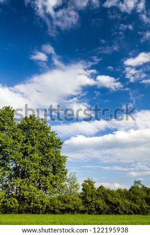 Summer forest landscape, meadow and green nature