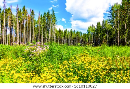 Summer forest meadow flowers landscape. Forest meadow flowers. Green forest meadow flowers landscape. Forest meadow flowers