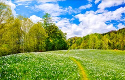 Summer forest meadow landscape. Flower field on sunny background