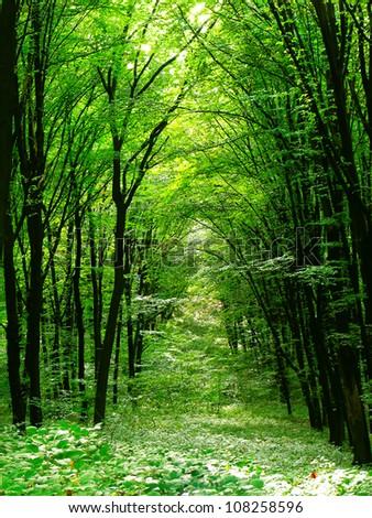 Summer forest. Nature green wood sunlight.