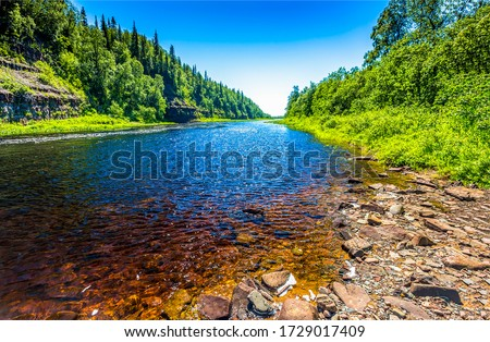 Summer forest river water landscape. River water in summer nature. Summer river view