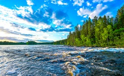 Summer forest river water view