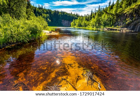Summer forest river water view. Forest river water in summer. River water view