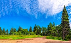 Summer forest road landscape. Forest road in summer. Summer forest trail