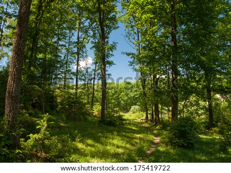 summer forest trail