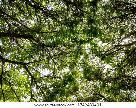 Summer forest tree tops view