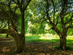 Summer forest trees shadows view. Spreading trees in summer forest. Hanging trees branches. Summer hanging tree branch