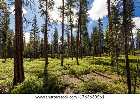 Summer forest with covered by wildflowers marge Photo stock ©
