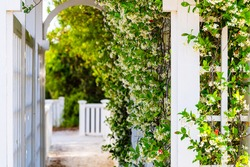 Summer garden clematis vine plant flowers outside gardening with tunnel archway path
