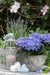 summer garden decoration with hydrangea in blue and vintage cage