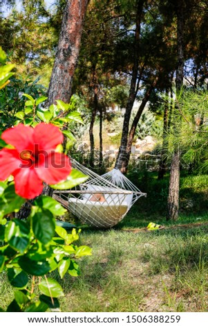 Summer garden under the pine trees with hanging hammock for relaxation, summer vacations concept