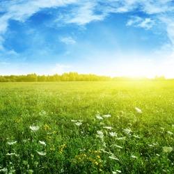 Summer grass field and sunlight in blue sky.