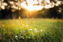 Summer grass meadow motion blur of pleasant wind with bright sunlight; sunny spring background