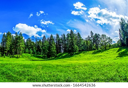 Summer green forest meadow in sunny day. Forest meadow in summer. Summer green forest meadow landscape