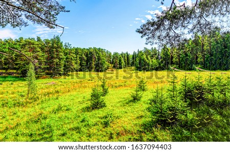 Summer green forest meadow view