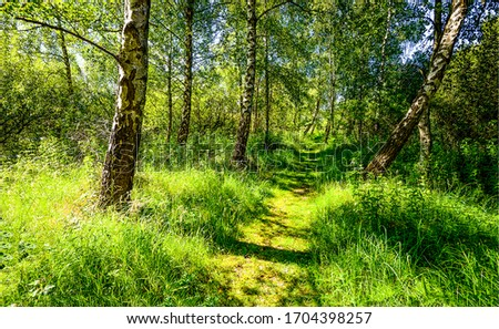 Summer green forest path view. Green forest path. Forest green path