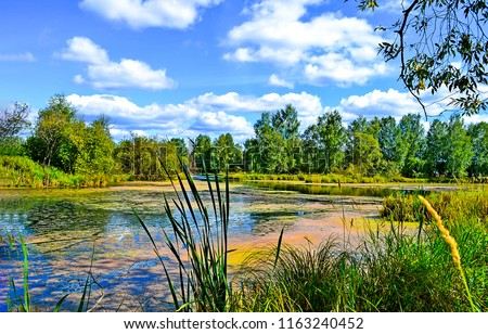 Summer green forest pond landscape. Summer duckweed pond in forest scene
