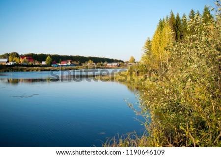 Summer green forest pond landscape. Summer duckweed pond in forest scene. Summer duckweed pond view