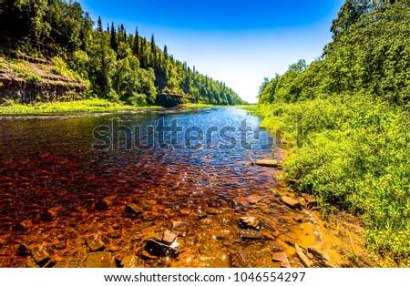 Summer green forest river landscape #1046554297