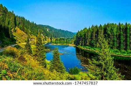 Summer green forest river landscape. Forest river view