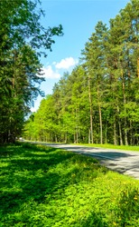 Summer green forest road view. Forest road. Road in forest. Summer forest road