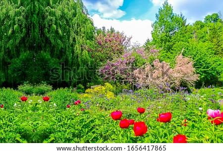 Summer green garden flowers view. Summer garden scene. Summer green garden. Red flowers in summer garden