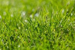 summer green grass  #hellosummer