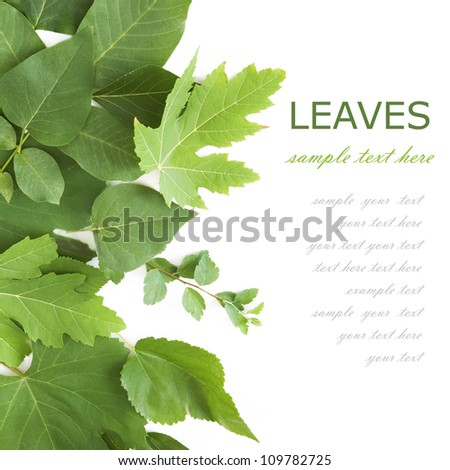 Summer green leaves isolated on white background with sample text