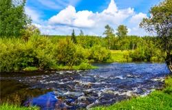 Summer green nature river landscape. Forest river wild flowing. Summer forest river flow. Summer river in forest