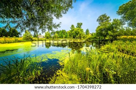 Summer green rural pond water. Summer rural pond. Rural pond water. Green rural pond view