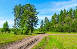 Summer green rural road landscape. Rural road in summer green nature. Summer rural road. Rural summer road