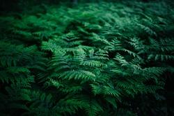 Summer green texture hundreds of ferns