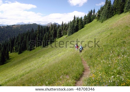 Summer hiking in the meadow.
