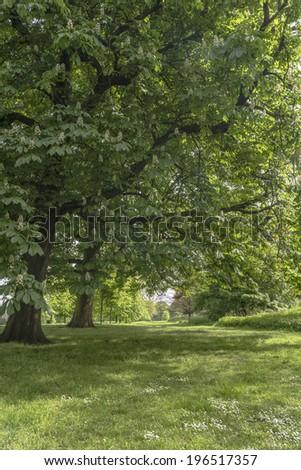 Summer in Greenwich park, London UK