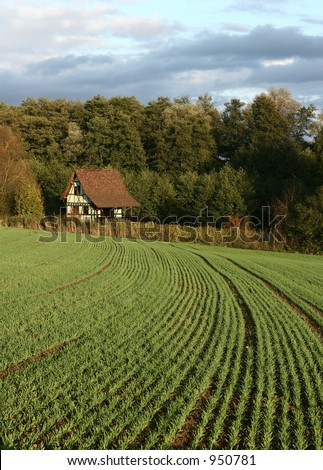 summer in the countryside  in alsace france, green lines in a field and a house at the end of the rows