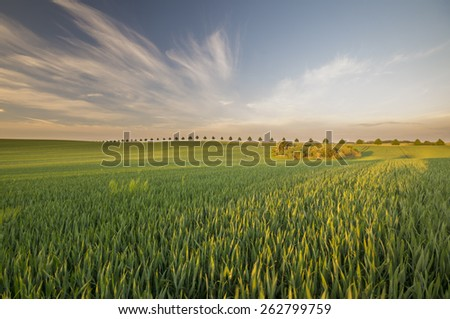 Summer in the fields #262799759