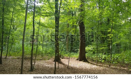 Summer in the Forrest Sommer im Wald Stock foto ©