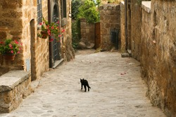 Summer. Italy. Civita di Bagnoregio. A typical European village (town) with stone houses and paving stones on the street. Flowers in the pots on the street. A black cat walks along the road.