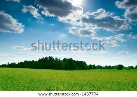 Summer Landscape - Shutterstock ID 1437794