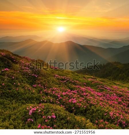 summer landscape - Shutterstock ID 271551956