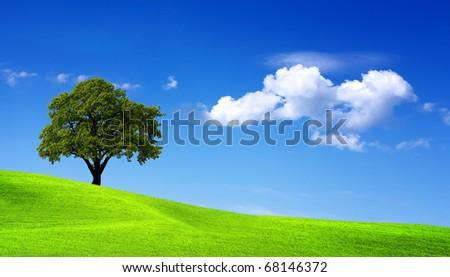 Summer landscape #68146372