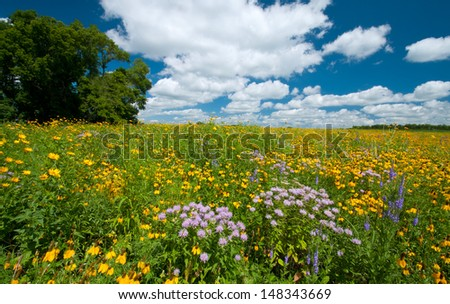 Summer landscape: a prairie full of flowers, with dramatic blue sky and clouds
