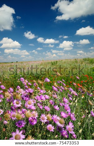 Summer landscape beautiful sky and wildflowers