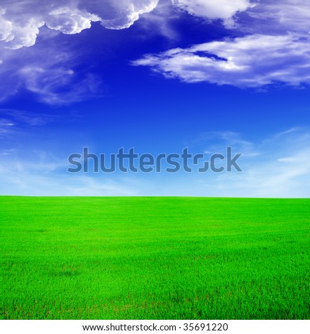 Summer landscape - blue sky and green field